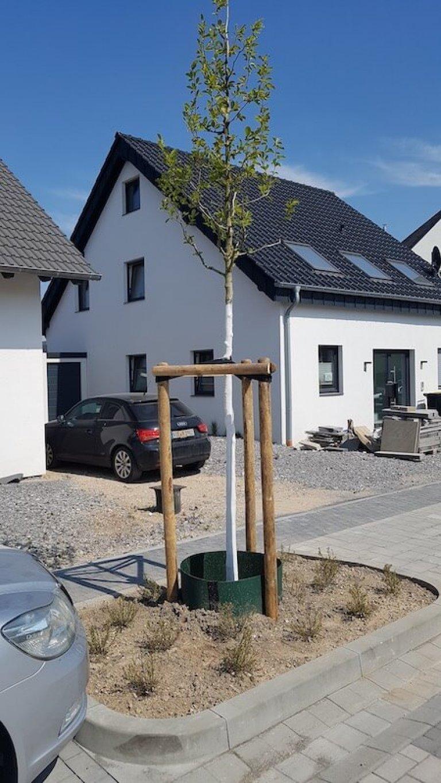 Burgacker Abschnitt 5 Bepflanzung