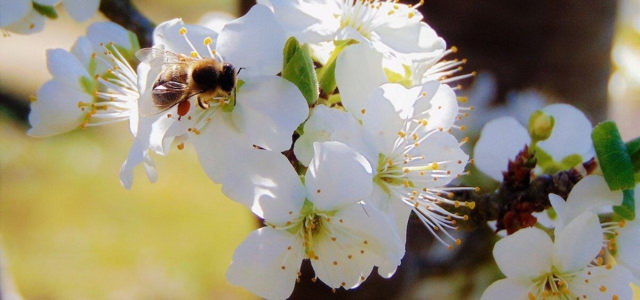Insektenfreundlich pflanzen