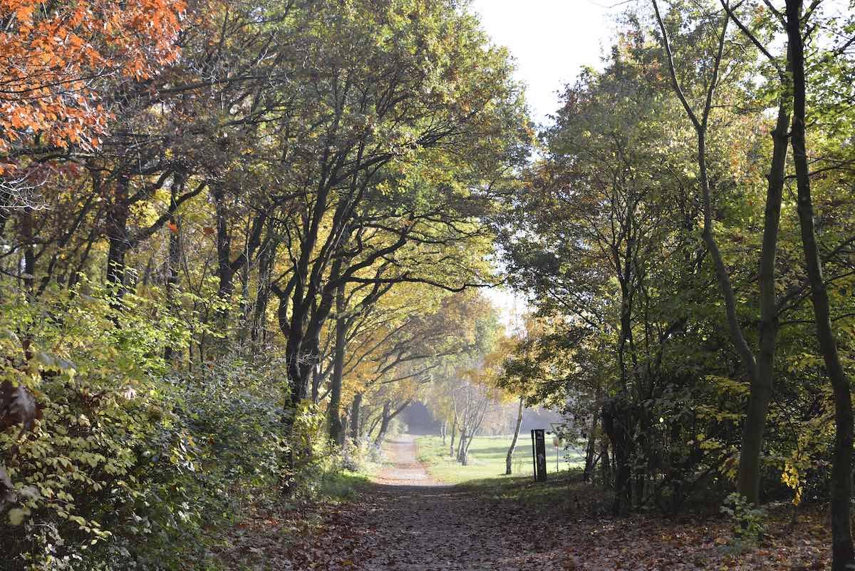 Herbstaktivitäten in Viersen