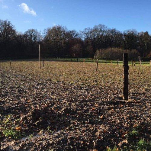 Ausgleichsbepflanzung an den Süchtelner Höhen