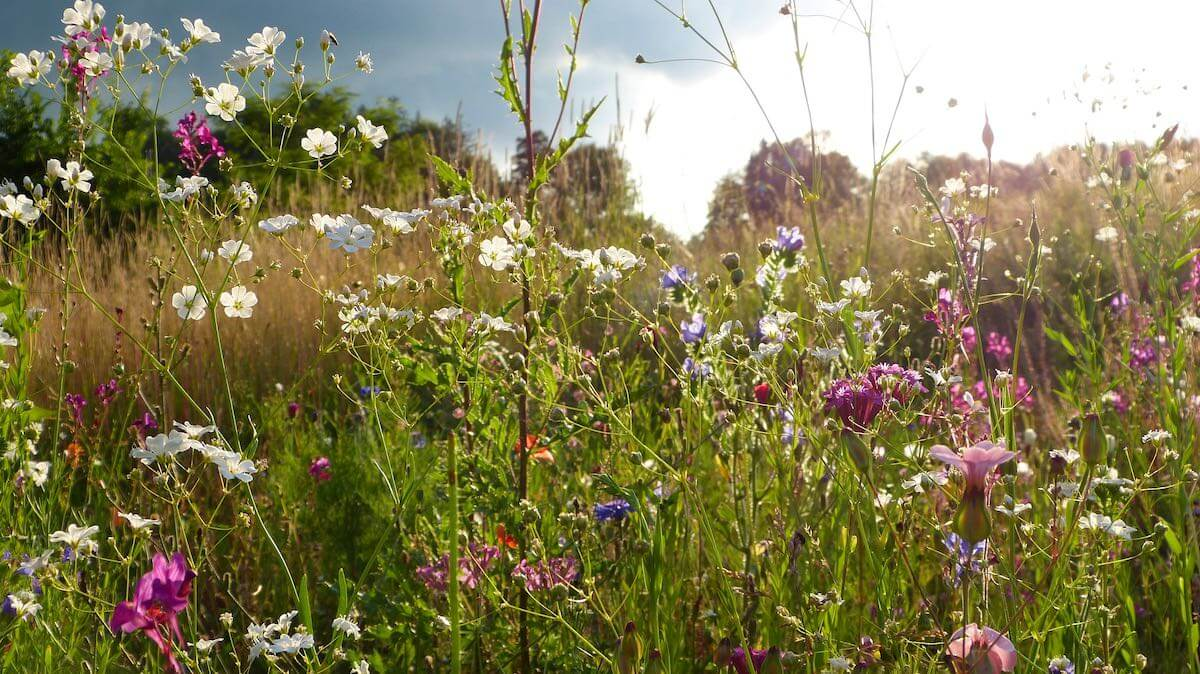 Ausgleichsbepflanzung als Kompensationsmaßnahme