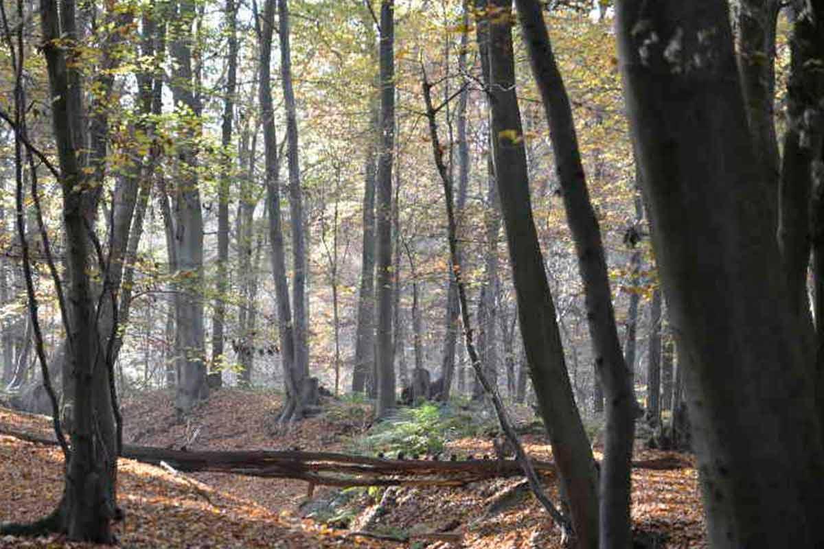 Wälder in Viersen